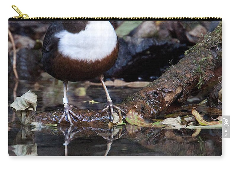 Dipper Carry-all Pouch featuring the photograph European Dipper by Bob Kemp