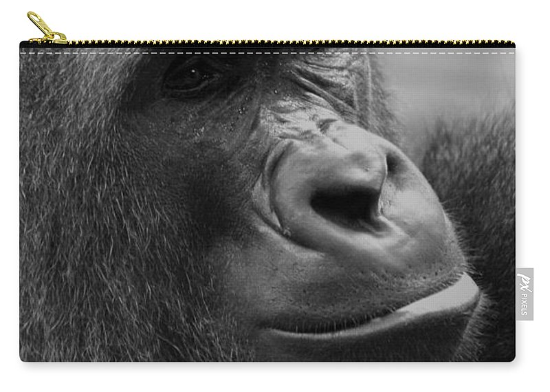 Africa Carry-all Pouch featuring the photograph Everyones Friend by Alan Look
