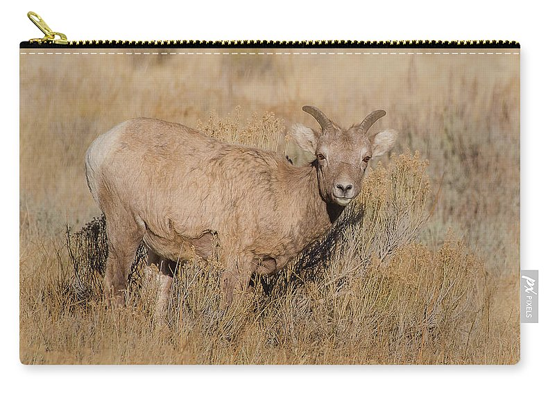 Sheep Carry-all Pouch featuring the photograph Ewe In Autumn Sun by Yeates Photography