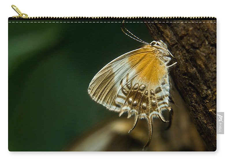 Butterfly Carry-all Pouch featuring the photograph Exotic Butterfly On Tree Bark by Douglas Barnett