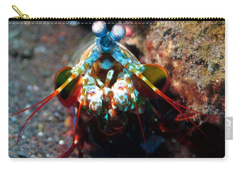 Carry-all Pouch featuring the photograph Eye Spy by Todd Hummel