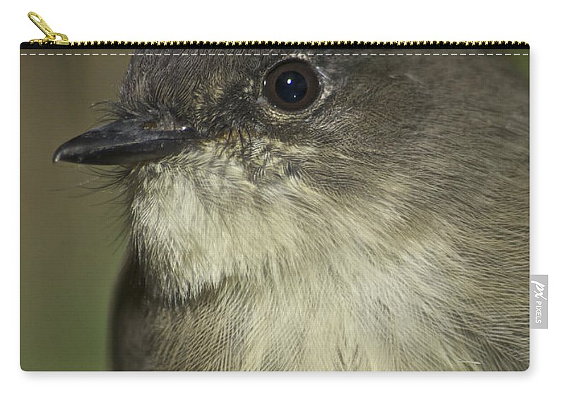 Eastern Wood Peewee Carry-all Pouch featuring the photograph Eye To Eye by Michael Peychich