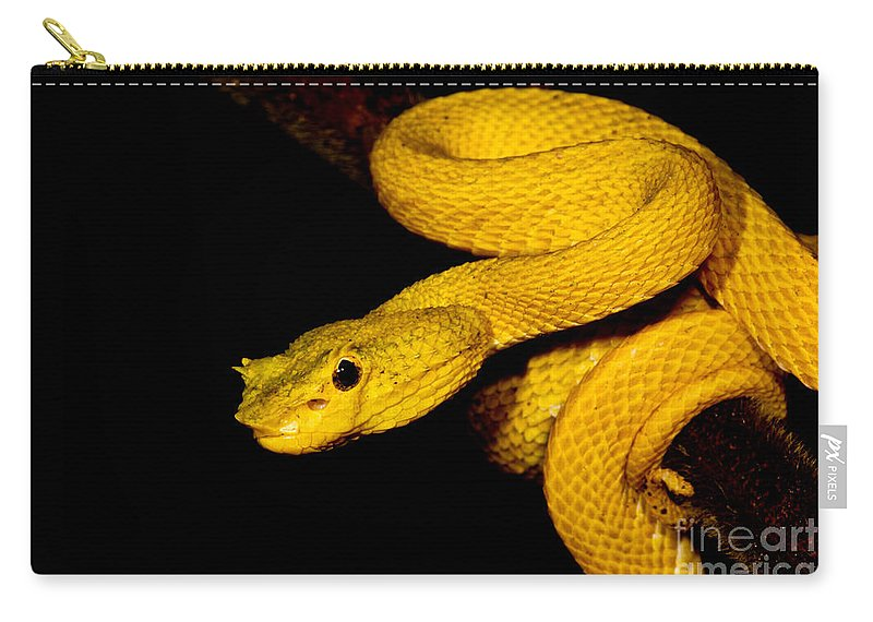 Eyelash Palm Pitviper Carry-all Pouch featuring the photograph Eyelash Palm Pitviper by Dant� Fenolio