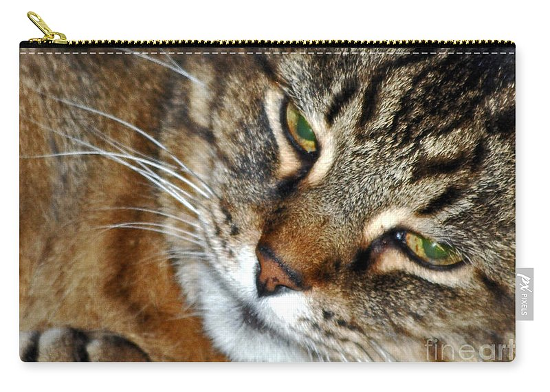 Cats Carry-all Pouch featuring the photograph Eyes Of Love by Lydia Holly