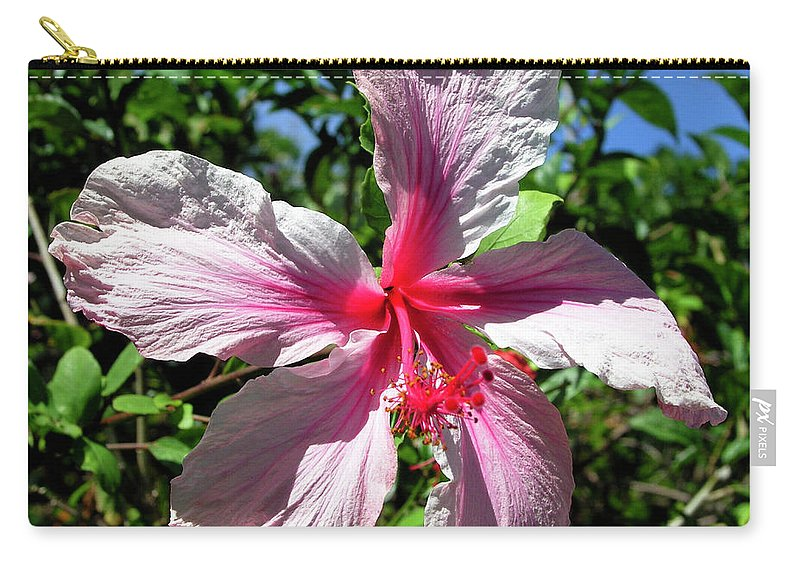 Pink Hibiscus Carry-all Pouch featuring the photograph F17 Pink Hibiscus by Donald k Hall