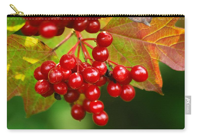 Autumn Carry-all Pouch featuring the photograph Fall Berries 2 by Michael Peychich