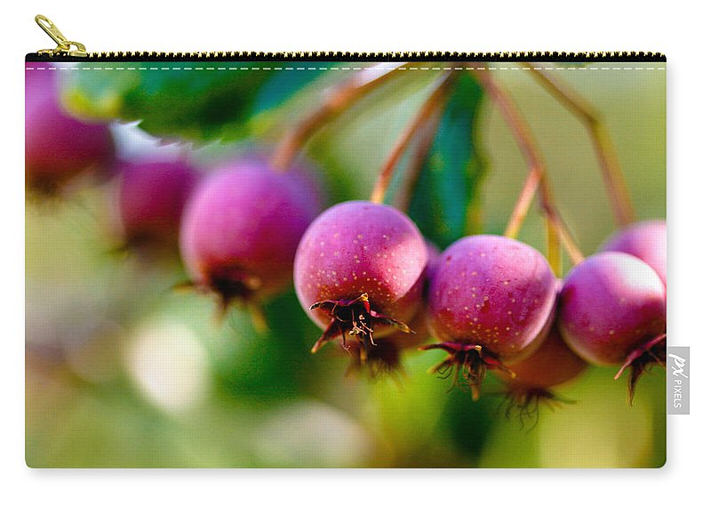 Berry Carry-all Pouch featuring the photograph Fall Berries by Marilyn Hunt