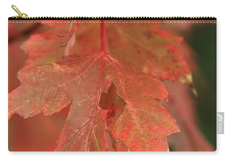 Carry-all Pouch featuring the photograph Fall Color In Softness by Deborah Benoit