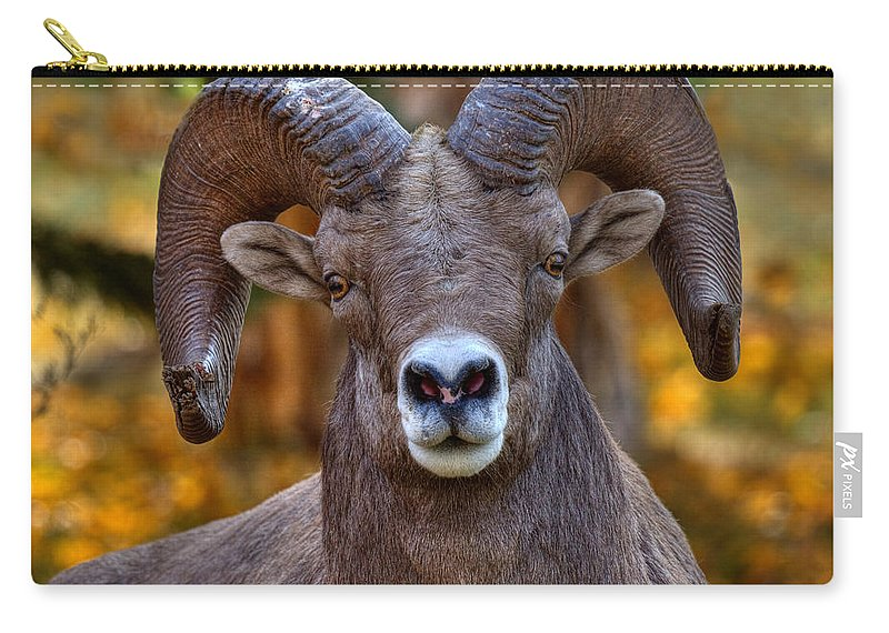 Bighorn Sheep Carry-all Pouch featuring the photograph Fall Ram by James Anderson
