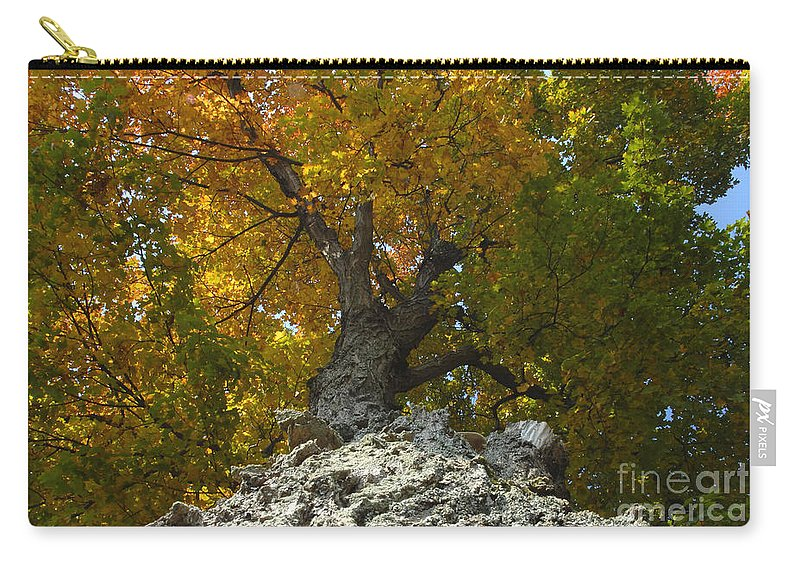 Fall Carry-all Pouch featuring the photograph Falling Tree by David Lee Thompson