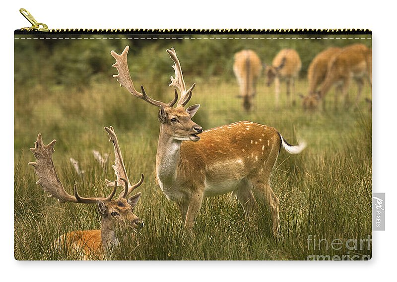 Fallow Deer Carry-all Pouch featuring the photograph Fallow Deer by Angel Tarantella
