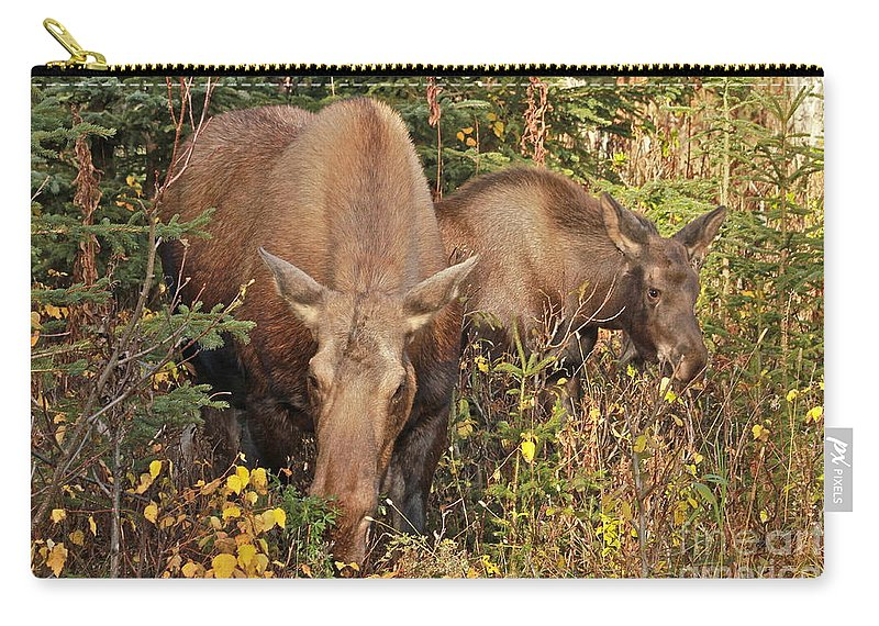 Moose Carry-all Pouch featuring the photograph Family Picnic by Rick Monyahan
