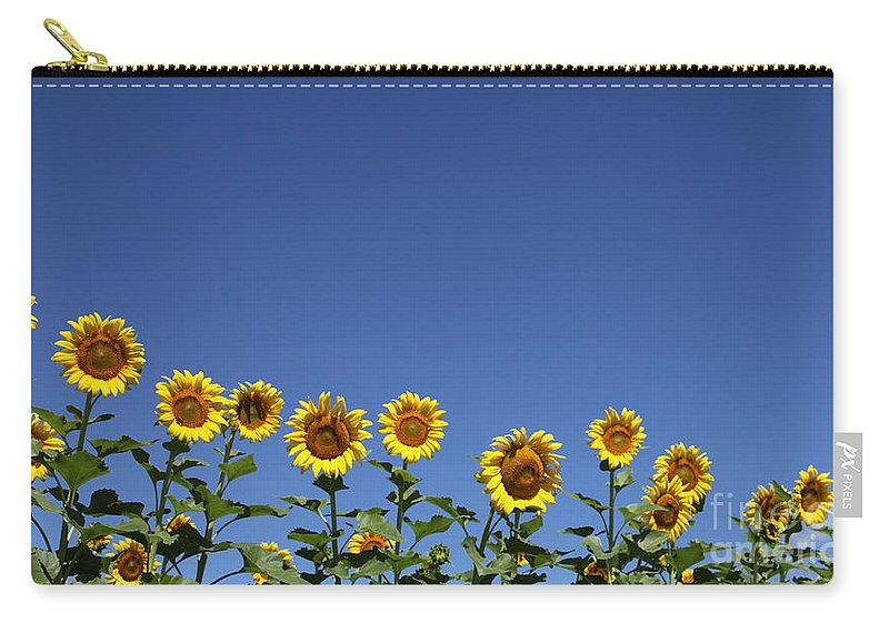 Sunflowers Carry-all Pouch featuring the photograph Family Time by Amanda Barcon