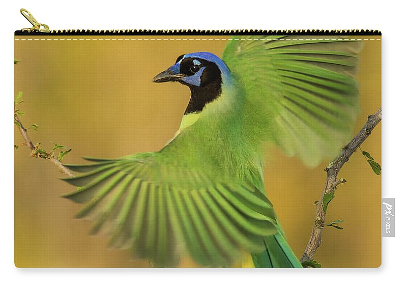 Green Jay Carry-all Pouch featuring the photograph Fan Dancer by Christopher Ciccone