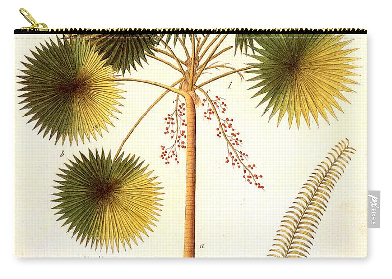1799 Carry-all Pouch featuring the photograph Fan Palm by Granger