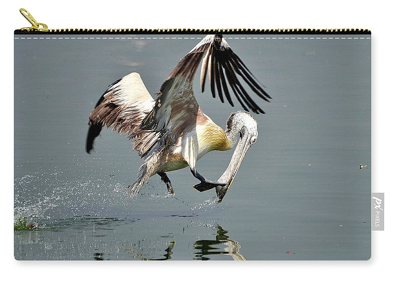 Pelican Carry-all Pouch featuring the photograph Fast And Focused  by Joseph Franco
