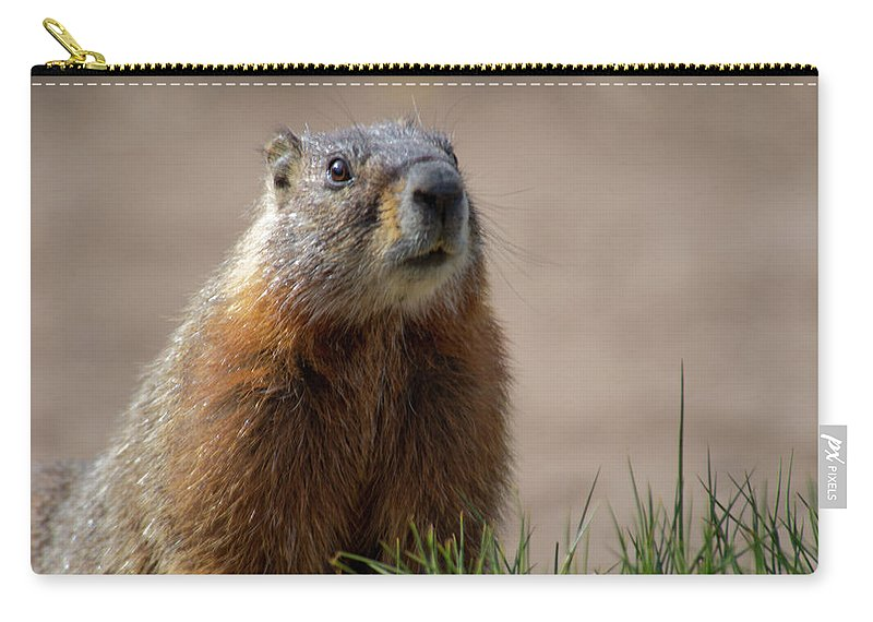 Wyoming Carry-all Pouch featuring the photograph Fearless by Frank Madia