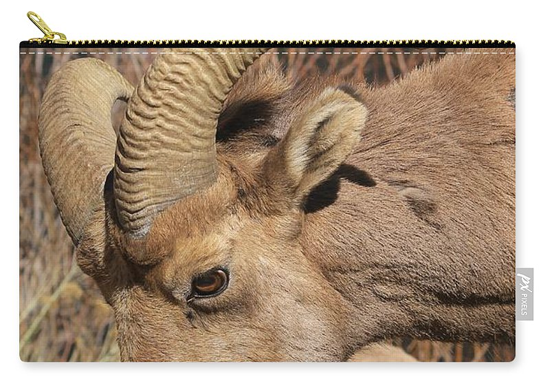 Nature Carry-all Pouch featuring the photograph Feeding Time 2 by Tonya Hance