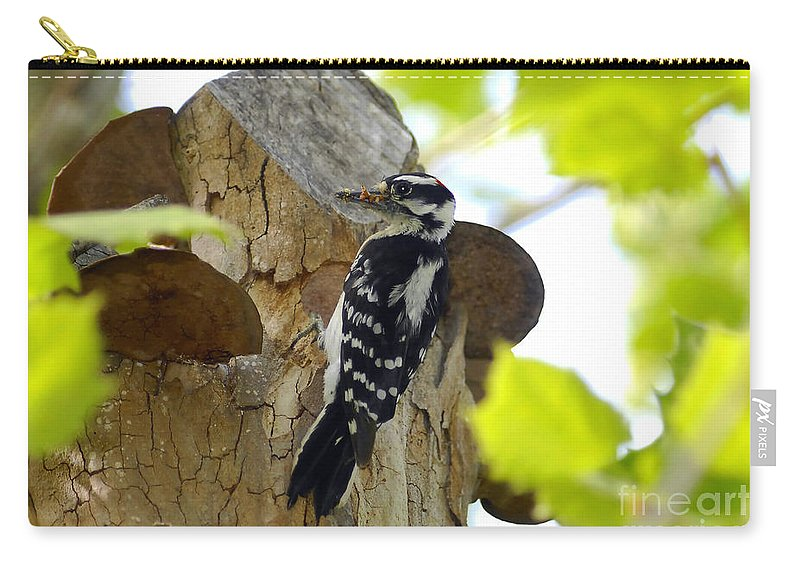 Downy Woodpecker Carry-all Pouch featuring the photograph Feeding Time by David Lee Thompson