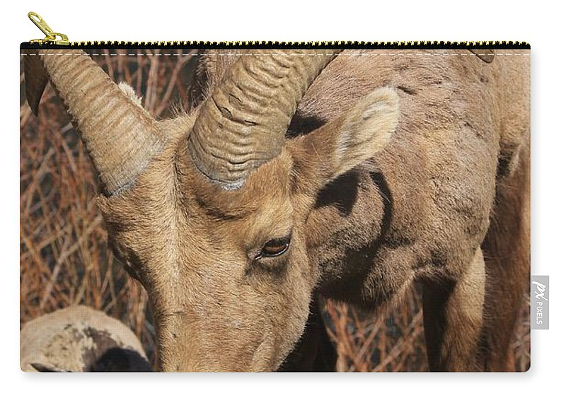 Nature Carry-all Pouch featuring the photograph Feeding Time by Tonya Hance