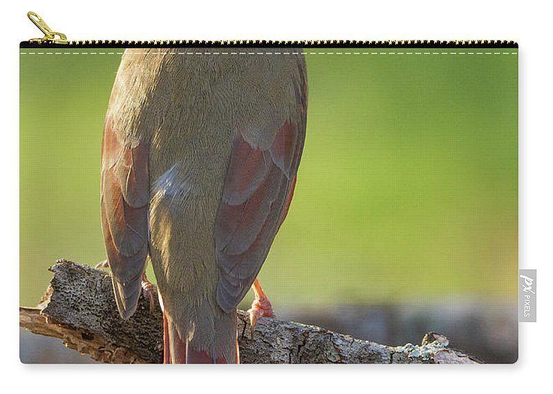 Birds Carry-all Pouch featuring the photograph Female Cardinal by David Waldrop