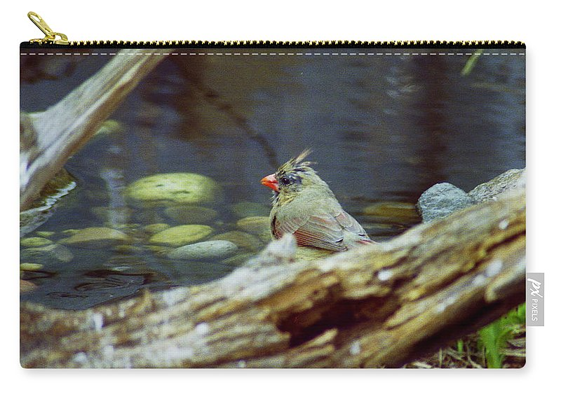 Female Carry-all Pouch featuring the photograph Female Cardinal by Michael Peychich