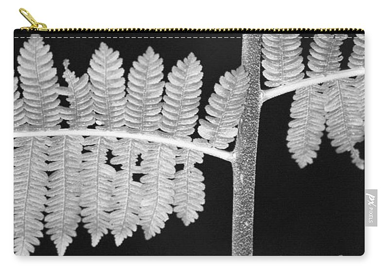 Fern Leaves Carry-all Pouch featuring the photograph Fern Leaves 1 by Donna Corless