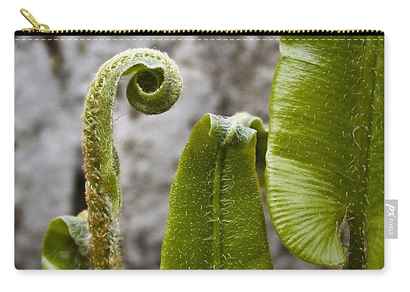 Irish Carry-all Pouch featuring the photograph Fern Study At Blarney Castle Ireland by Teresa Mucha