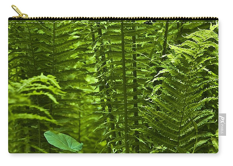 Countryside Carry-all Pouch featuring the photograph Fern by Svetlana Sewell