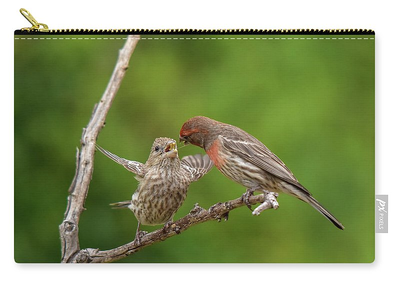 Linda Brody Carry-all Pouch featuring the photograph Finch Feeding Time I by Linda Brody