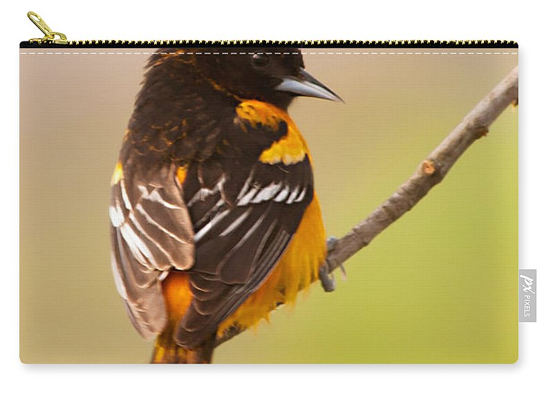 Finch Carry-all Pouch featuring the photograph Finch by Gaby Swanson
