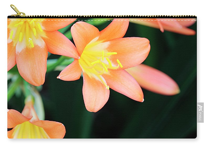 Clivia Carry-all Pouch featuring the photograph Fire Lily 2 by Neil Overy