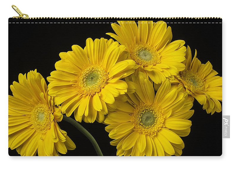 Horizontal Still Life Carry-all Pouch featuring the photograph Five Gerbera Daisies by Garry Gay