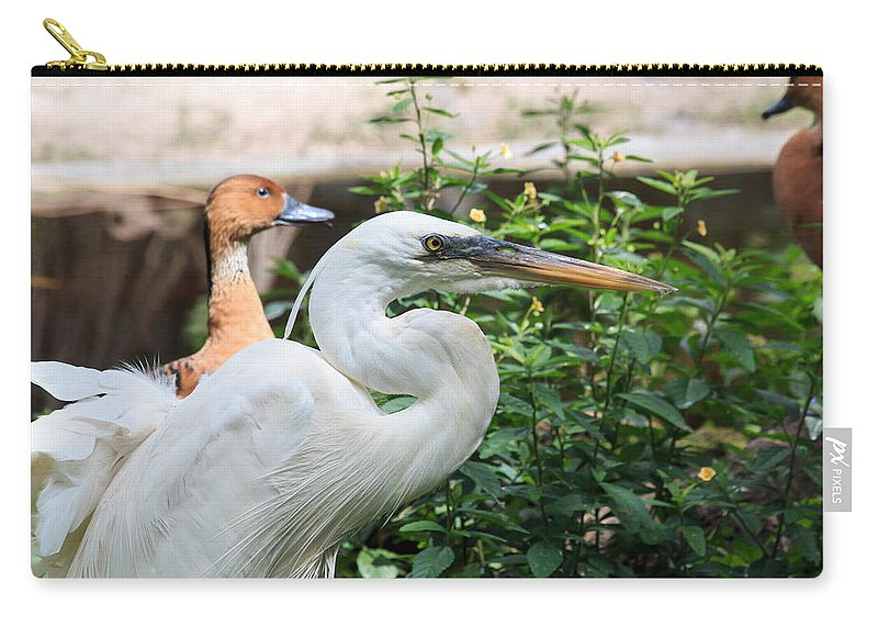 Florida Carry-all Pouch featuring the photograph Flamingo Gardens - Great Egret Profile by Ronald Reid