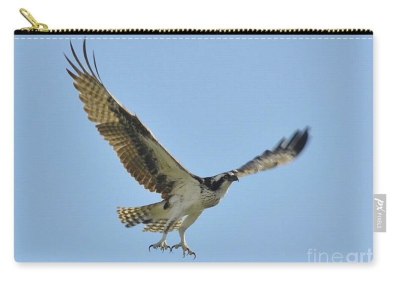Osprey Carry-all Pouch featuring the photograph Flight Of The Osprey by David Lee Thompson