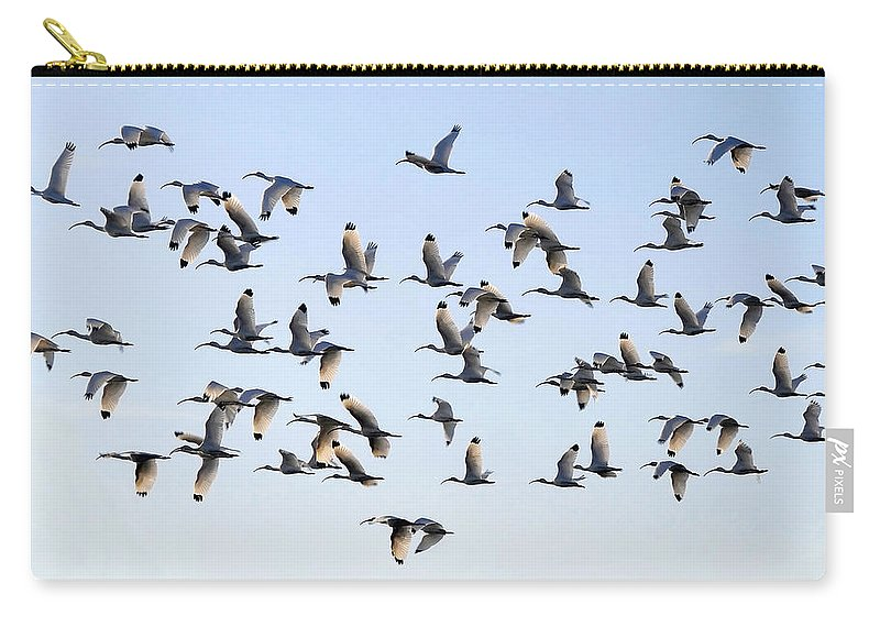 White Ibis Carry-all Pouch featuring the photograph Flight Of The White Ibis by David Lee Thompson