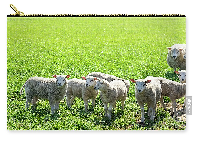 Agricultural Carry-all Pouch featuring the photograph Flock Of Sheep Standing In A Field Waiting by Tetyana Ustenko
