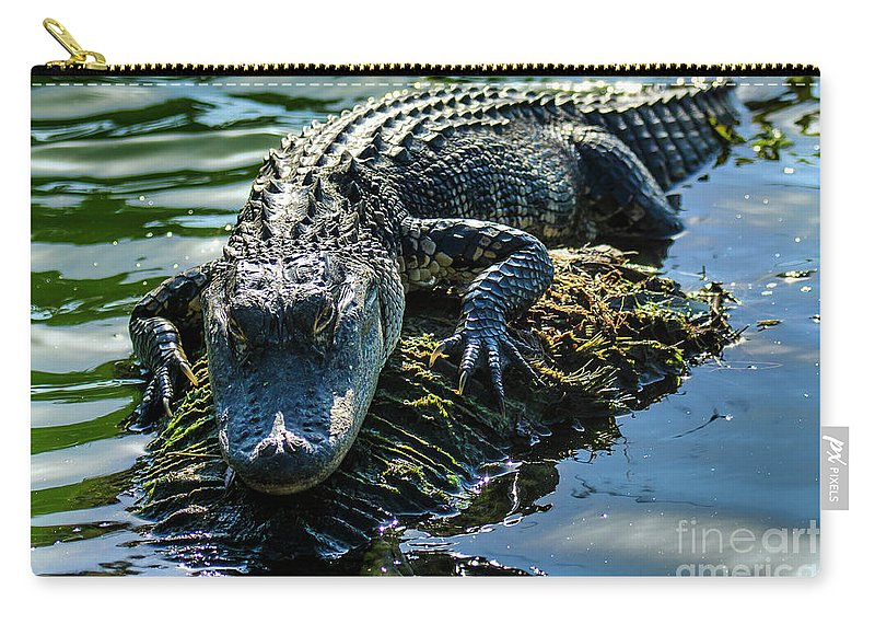 Alligator Carry-all Pouch featuring the photograph Florida Alligator by Ben Graham