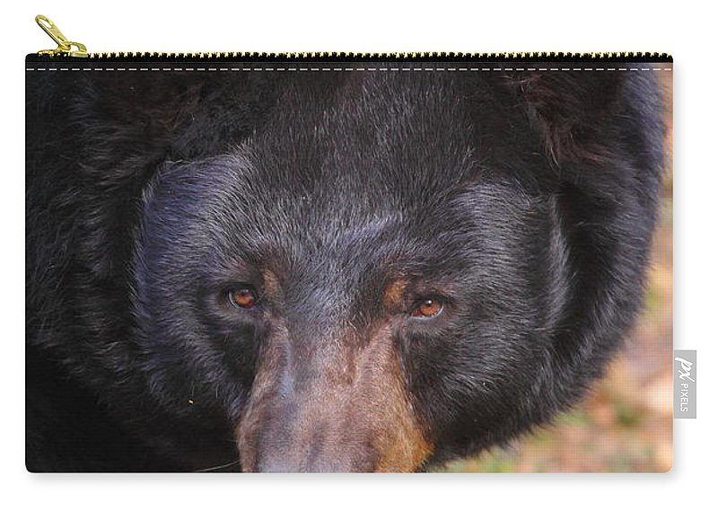 Bears Carry-all Pouch featuring the photograph Florida Black Bear by Bruce J Robinson