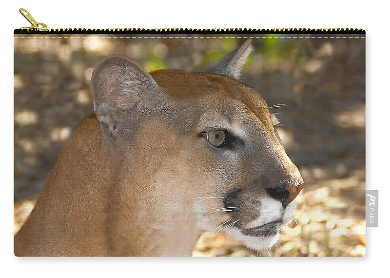 Florida Carry-all Pouch featuring the photograph Florida Panther by David Lee Thompson