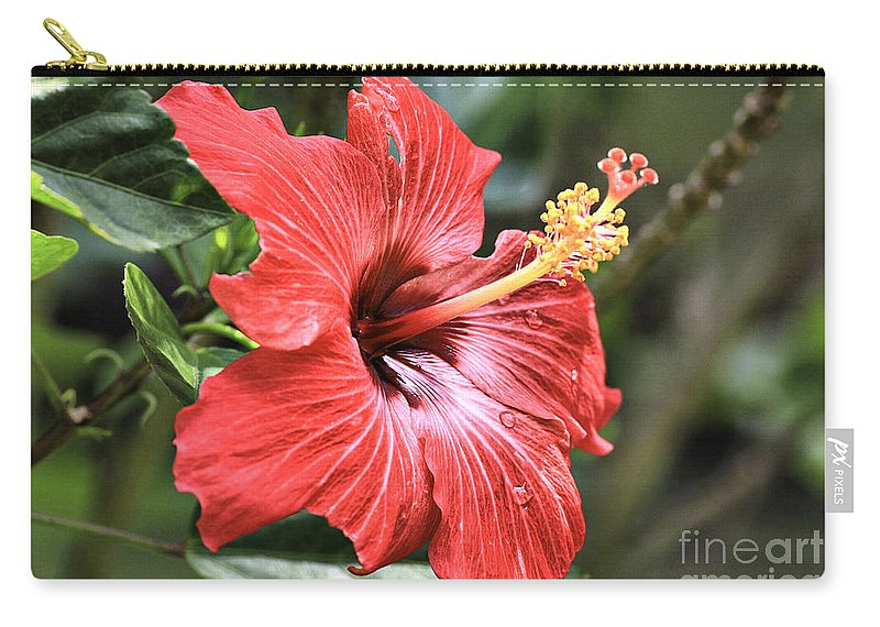 Flower Carry-all Pouch featuring the photograph Florida Red by Deborah Benoit