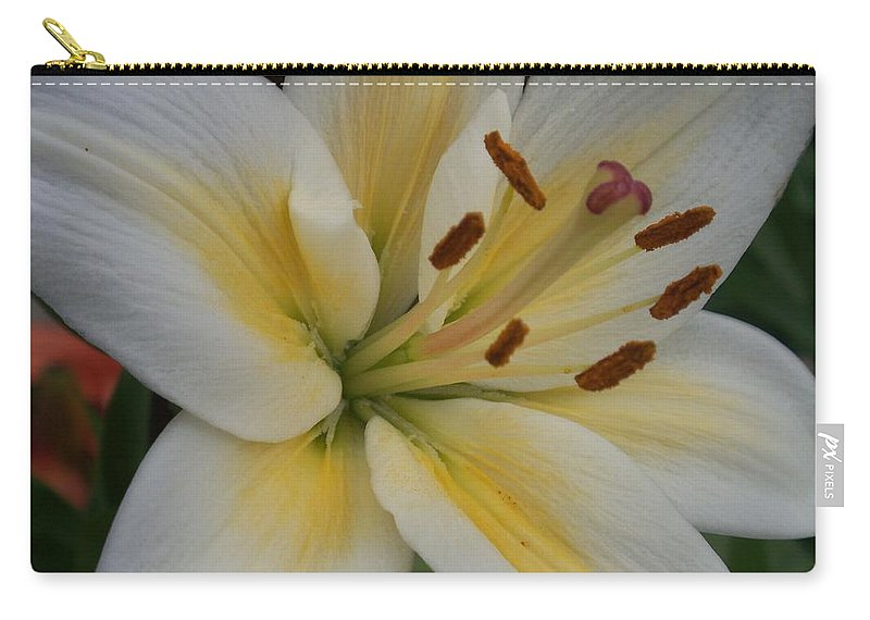 Flower Carry-all Pouch featuring the photograph Flower Close Up 1 by Anita Burgermeister