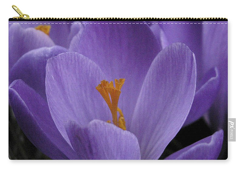 Flowers Carry-all Pouch featuring the photograph Flower Crocus by Nancy Griswold