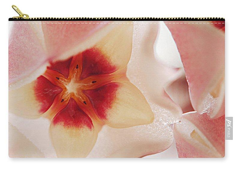 Flower Carry-all Pouch featuring the photograph Flower Hoya 3 by Jill Reger