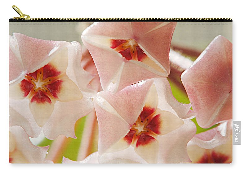 Flowers Carry-all Pouch featuring the photograph Flowers-hoya 1 by Jill Reger
