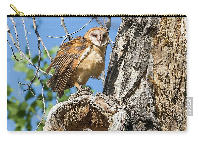 Barn Owl Carry-all Pouch featuring the photograph Fluffed Up Barn Owl Owlet by Tony Hake