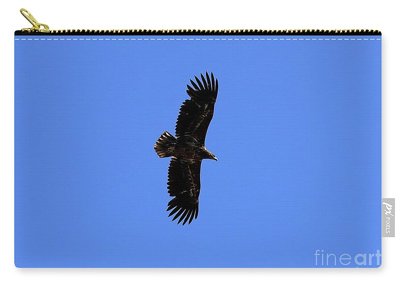 Eagle Carry-all Pouch featuring the photograph Flying by Arild Lilleboe