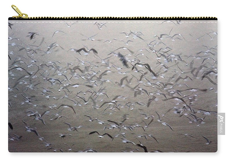 Flight Carry-all Pouch featuring the photograph Flying Gulls by Bob Kemp