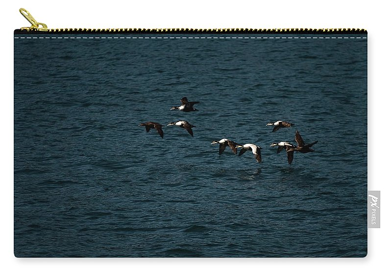 common Eider Carry-all Pouch featuring the photograph Flying Under The Radar by Paul Mangold