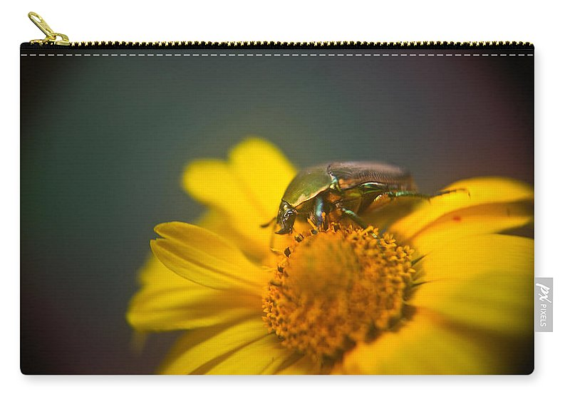 Coleoptera Carry-all Pouch featuring the photograph Focused June Beetle by Douglas Barnett
